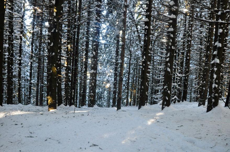 padure iarna