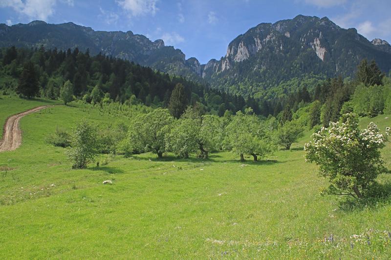 valea crăpăturii văzută din poienile dinspre nord