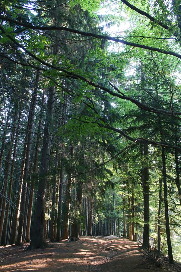 pădurea pleșuvei