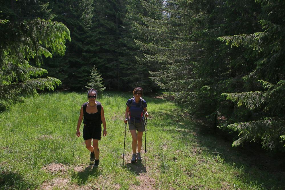 adina și luci în pădurea păduchiosului