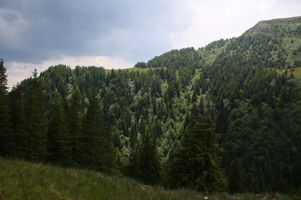pădurea vânturișului