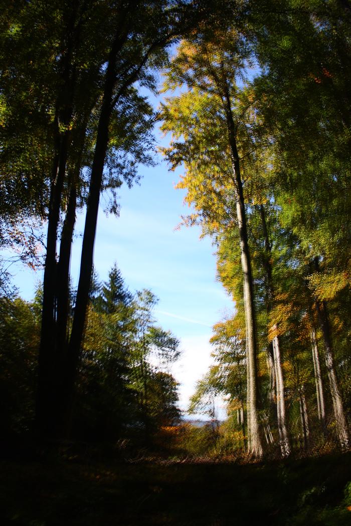 pădurea se cutremură :))