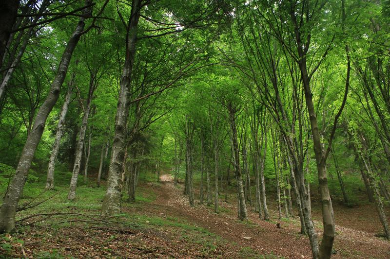 pădurea craiului