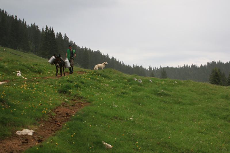 ciobanii din poiana zănoaga