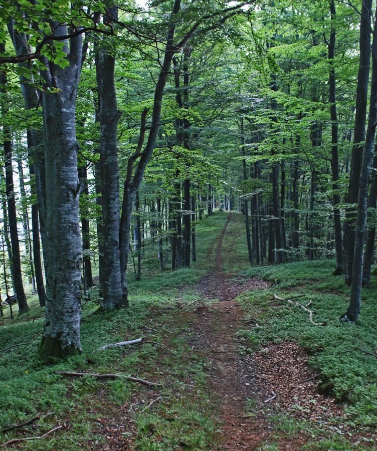 culme în pădure