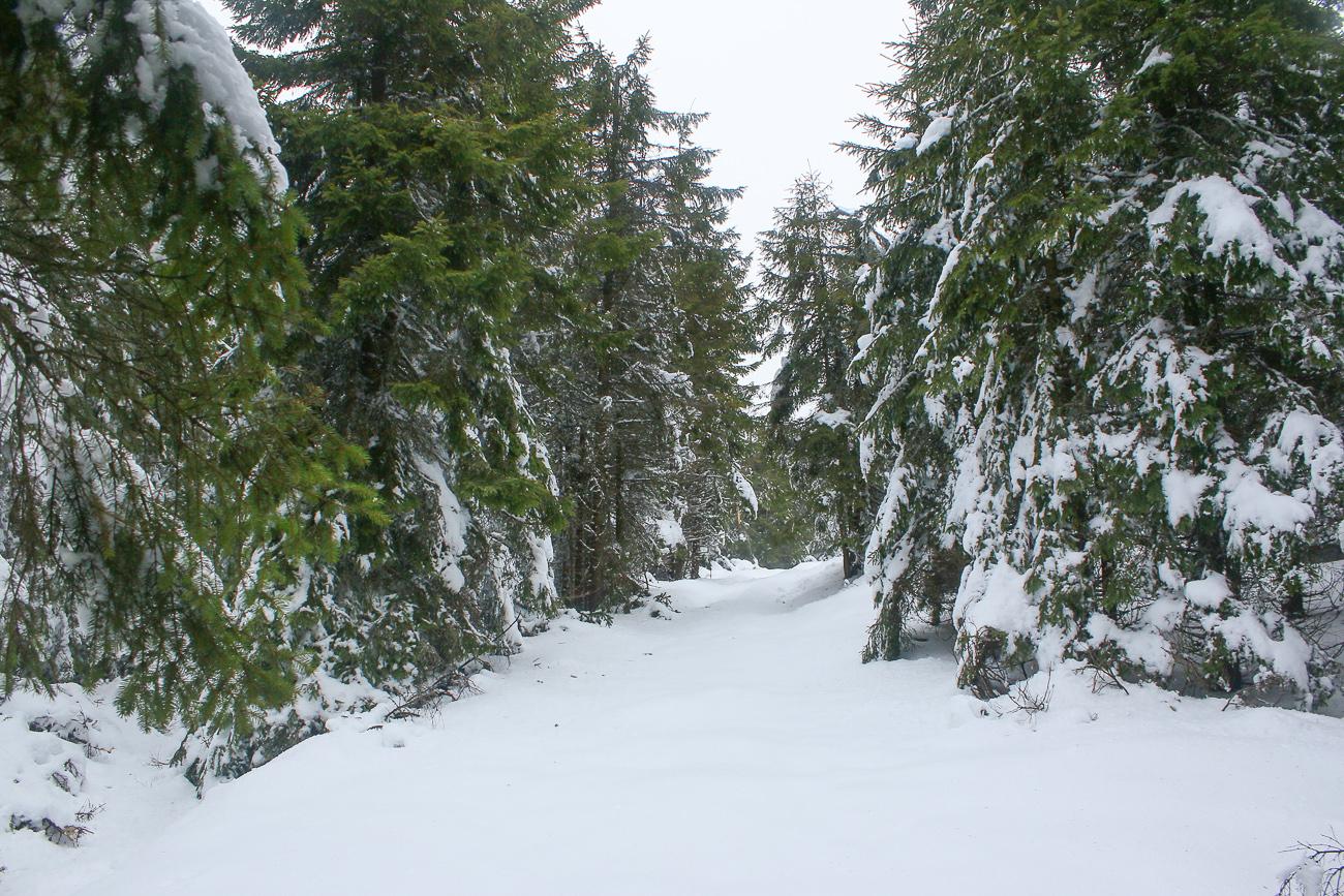 iarna de nemira