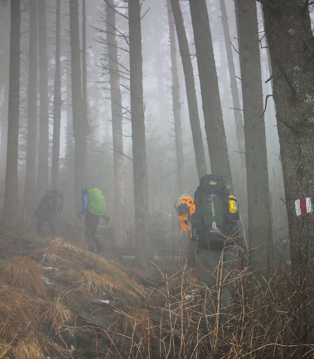 Cețuri în pădurea de foioase