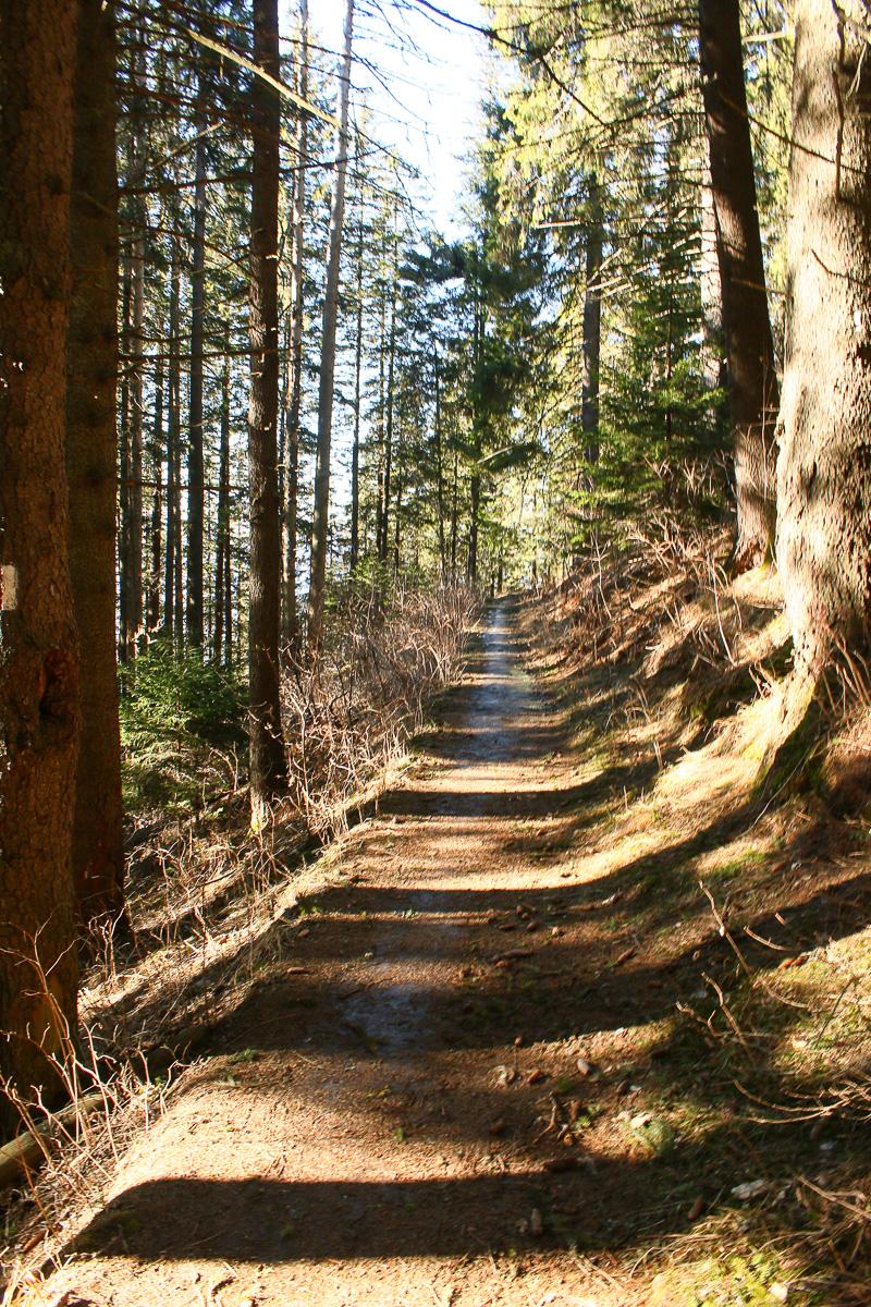 Potecă în pădurea de foioase Ceahlău
