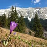 Tură de întâmpinare a primăverii în Bucegi