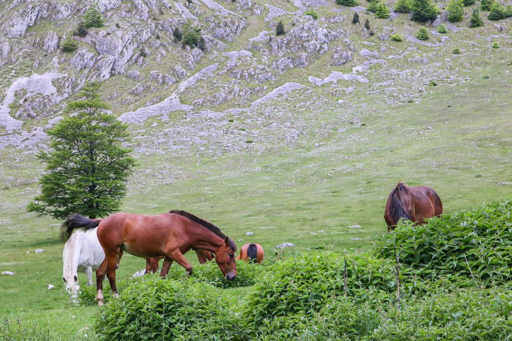 Caii din Crovul Medved