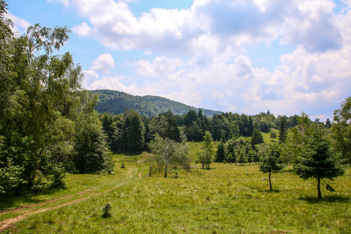 Potecă în munții Brețcu-Oituz
