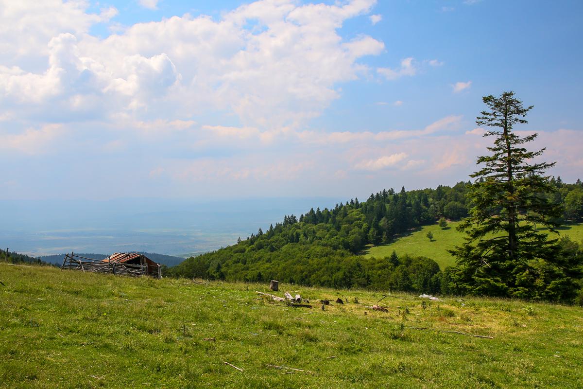 Stână munții Brețcu-Oituz