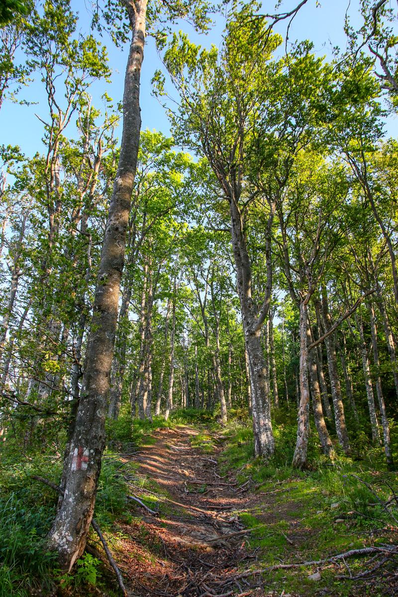 Pădure de fag munții Brețcului