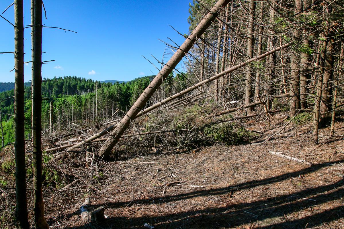 Potecă distrusă în munții Brețcu