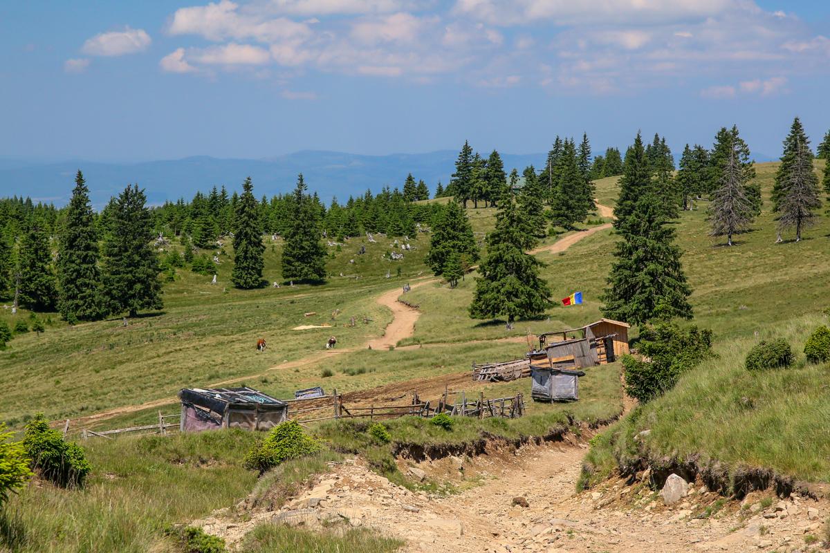 Stână patriotică în munții Brețcu