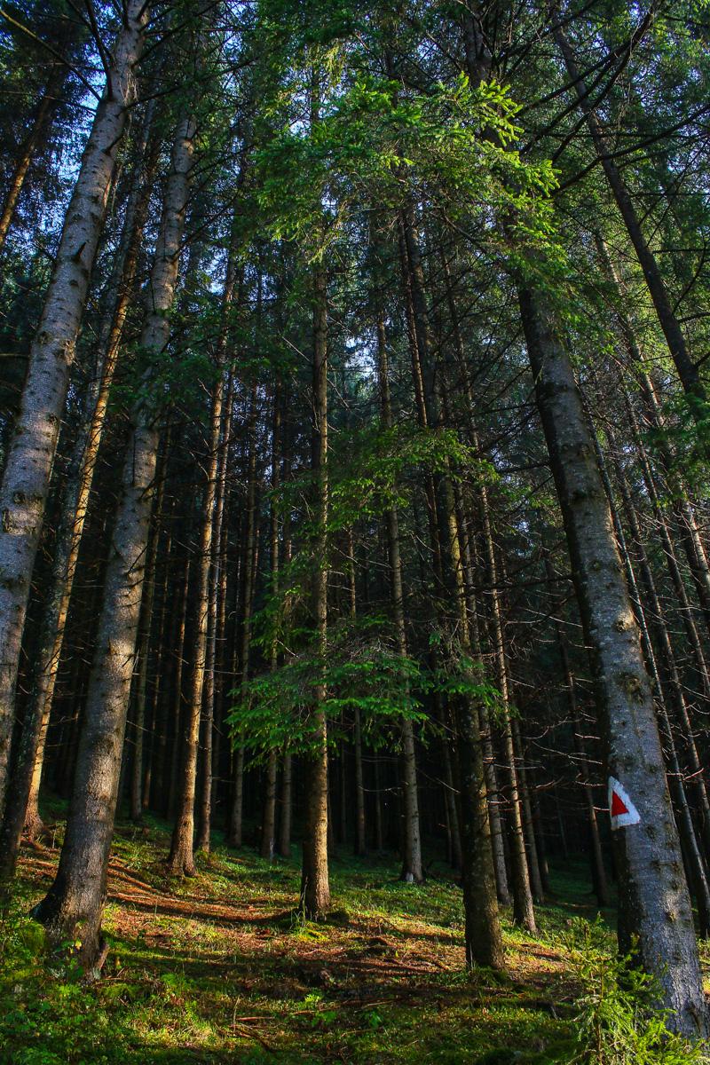 Pădurea din Hășmaș