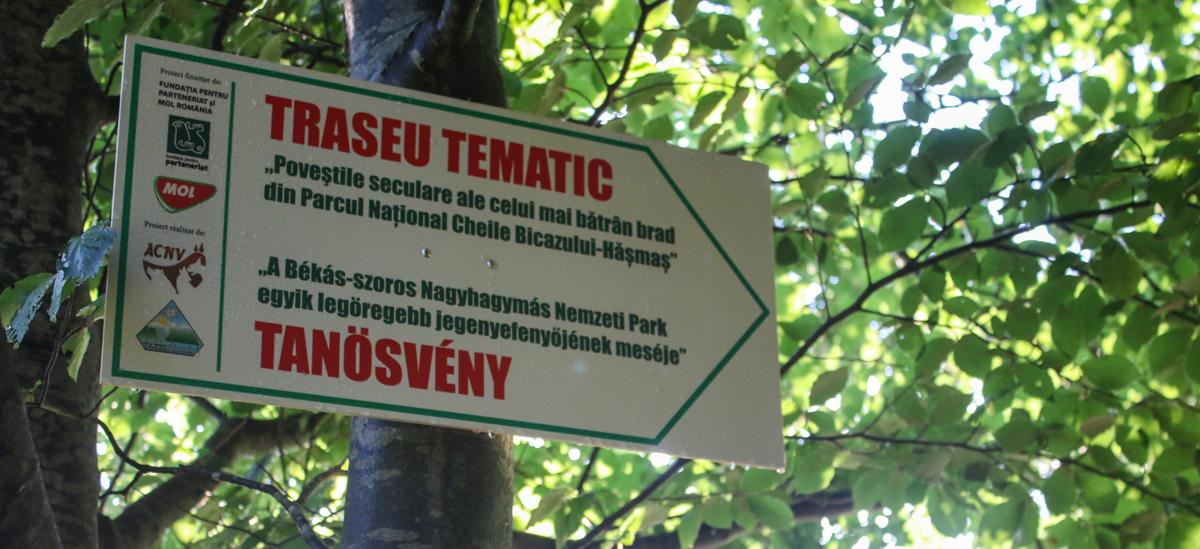 Indicator în Parcul Național Hășmaș Cheile Bicazului