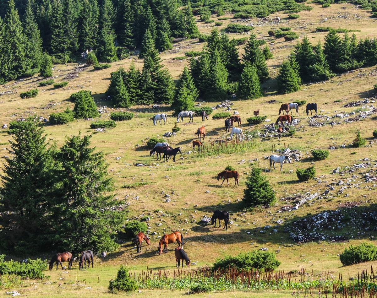Cai în Poiana Albă