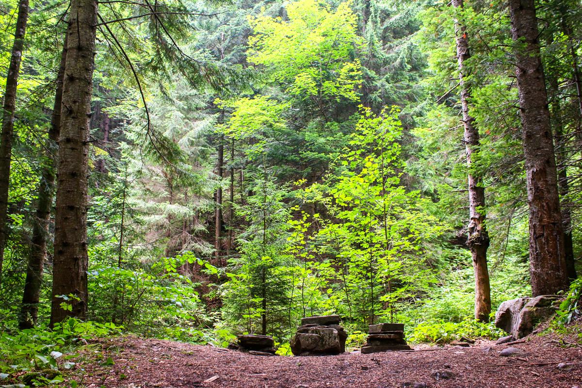 Pădurea de foioase Ceahlău