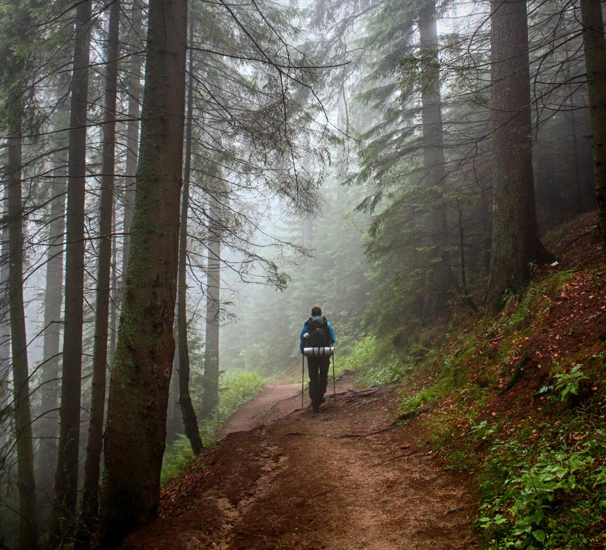 Pădure Ceahlău