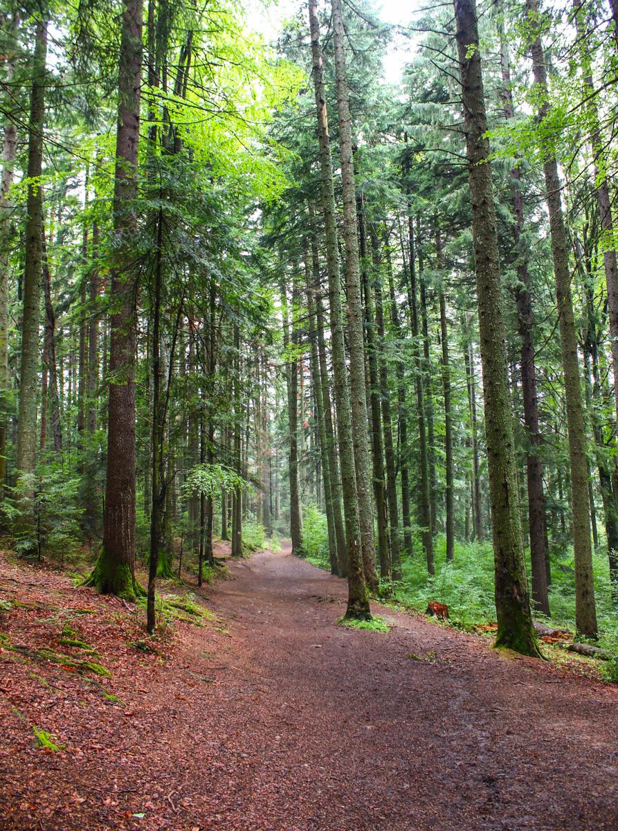 Pădure Durău