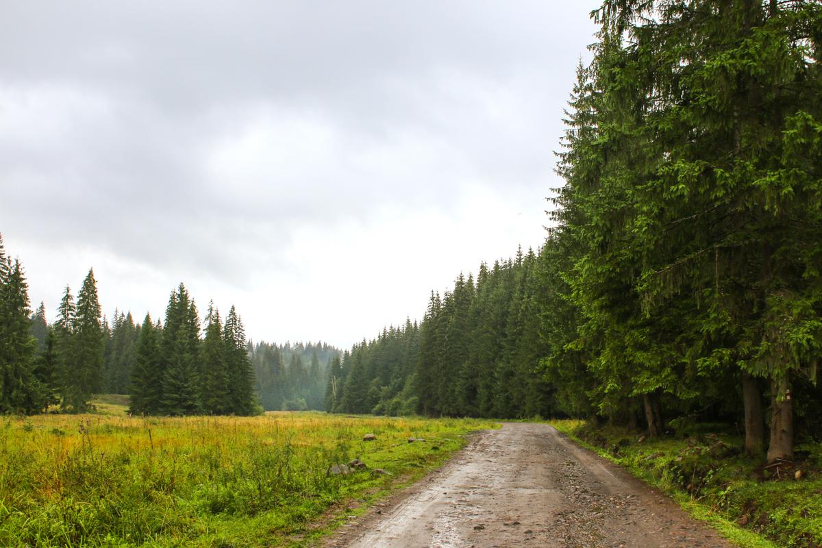 Drum pe Valea Lomașului