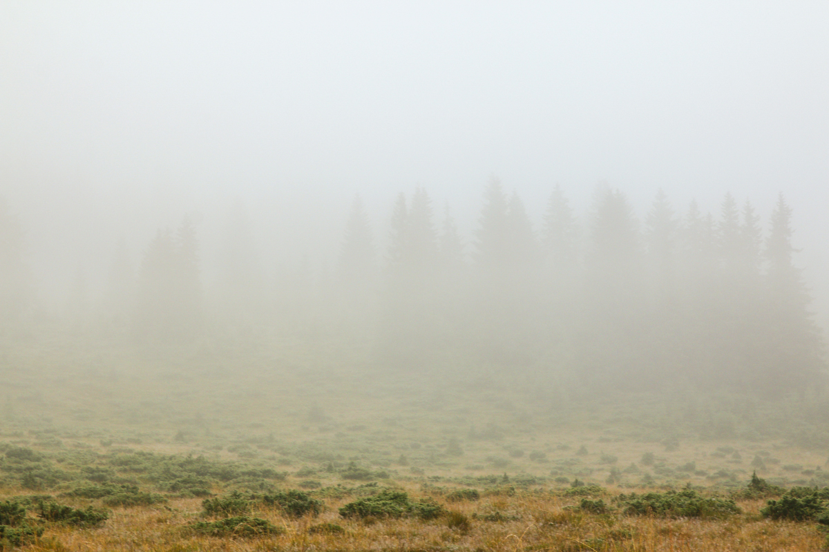 Ceață în Călimani